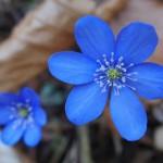 botanicky-kviz-uvod